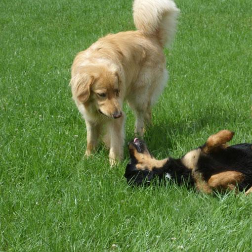 Merlin und Annabelle beschnuppern sich nach langer Trennung (und finden noch Gefallen aneinander)