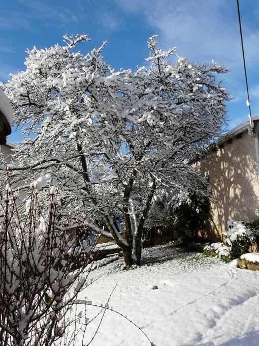 Photo 1 27/11/2010 : cerisier sous la neige