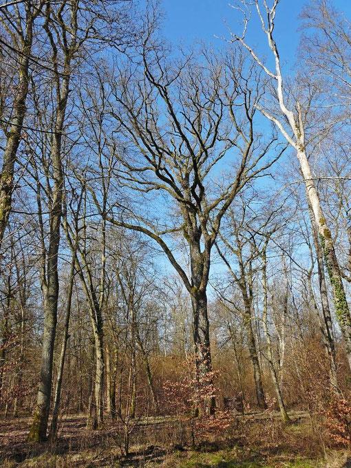 Forêt de Bride