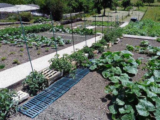 tomate, jardinage