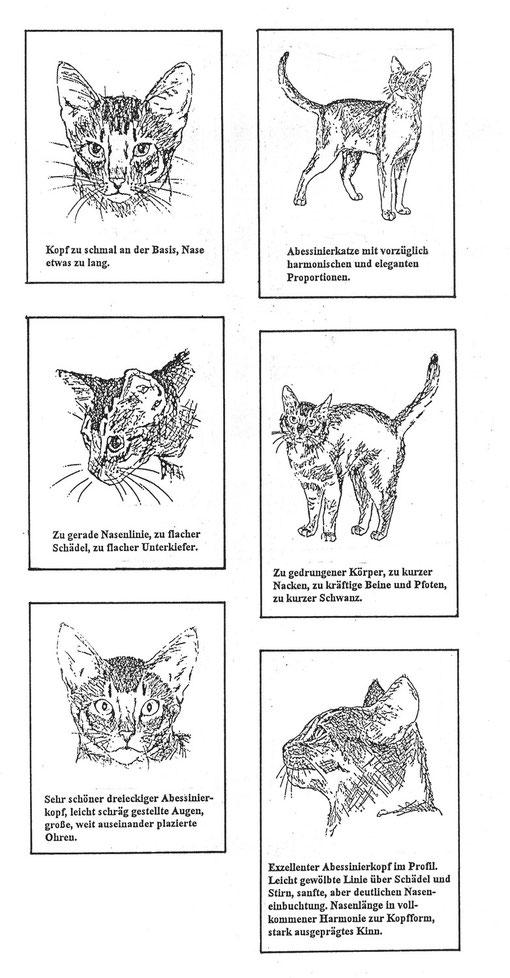 Zeichnungen: Mit freundlicher Genehmigung von Frau Ingrid Filgraebe-Holland