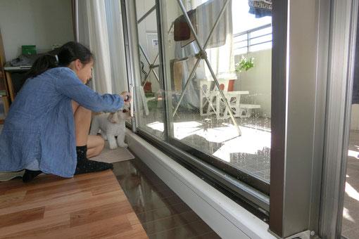 窓拭き お手伝い スクイーザー 掃除