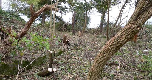 Das Ergebnis der Landschaftspflege