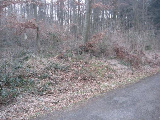 Waldstück am Lichtenberg in Bad Nauheim. Links im Hintergrund der Grabstein. Die Entfernung von der Straße zum Grabstein beträgt etwa 25 Meter