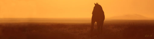 The Namib Desert Horses