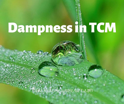 """""""Dampness in TCM"""" over a moist leaf"""