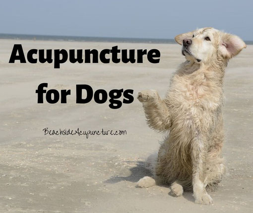 Acupuncture for Dogs - Dog on a beach