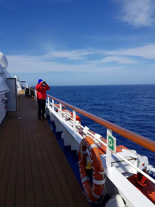 Albatrossen spotten op een zonnige en kalme Drake Passage