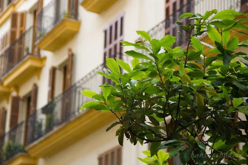 Fassade in Palme de Mallorca