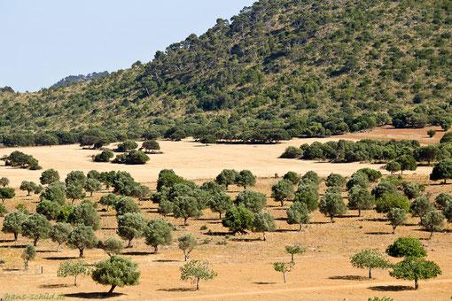 reizvolle Landschaft Mallorcas