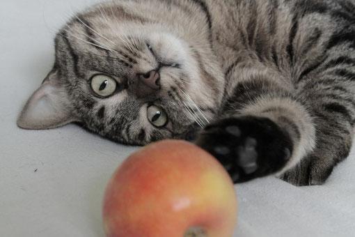 Matisse et... le fruit défendu...?