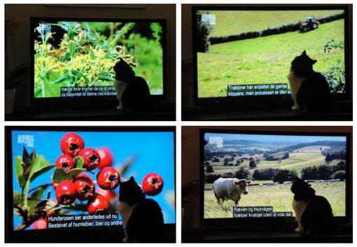 Neela est complétement fan de notre nouvelle TV... Specialement la chaîne Animal Planet, des programmes à vous faire tourner la tête...