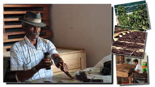 Production traditionnelle de la Vanille Bourbon, malheureusement aujourd´hui quasi inexistante face au marché asiatique et malgache. Un savoir-faire dont les réunionnais sont fiers et qu´ils tentent malgré tout de protéger