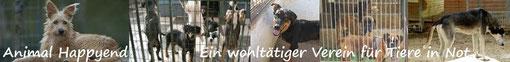 Animal Happyend - Ein wohltätiger Verein für Tiere in Not - Penny kam über diesen Verein zu New Graceland