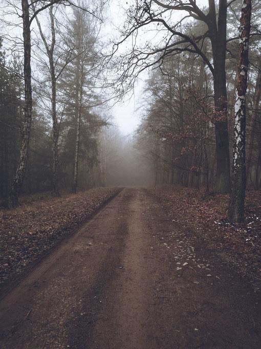 Fotografie – Wald im Nebel