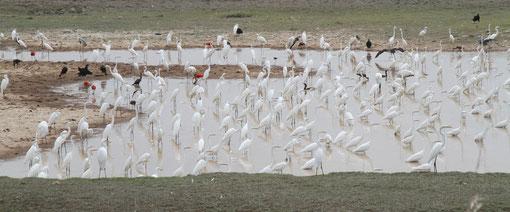 In Los Llanos leben etwa 350 versiedenen Tierarten