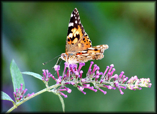 Schmetterling in Hamburg