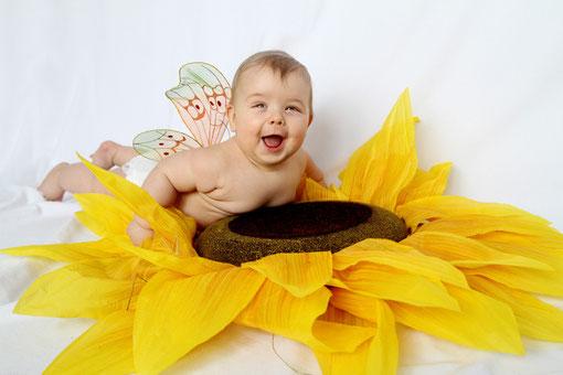 kleiner Schmetterling auf einer Sonnenblume