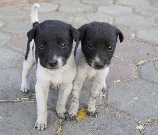 Strassenhunde