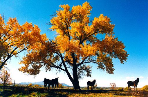 Baum in Amerika