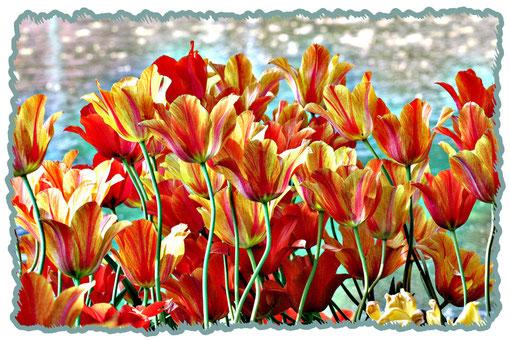 Tulpen am See