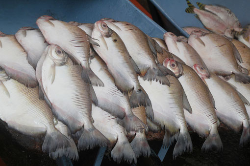 Fischmarkt in Puerto Ayacucho