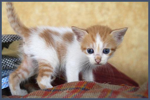 kleines Kätzchen in Ghana