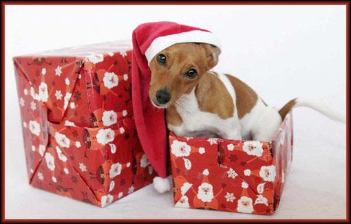 Wann kommt denn endlich der Weihnachtsmann?
