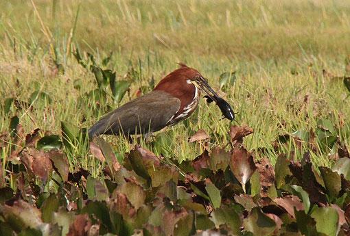 Vogel mit Beute