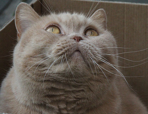 Katze von Birgit