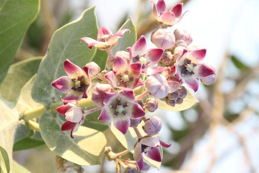 Pflanze in der Wüste