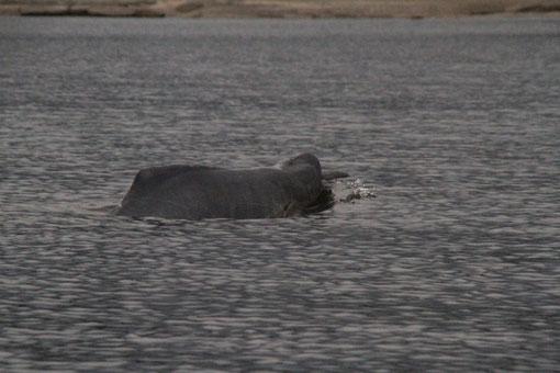 Wasserdelfine