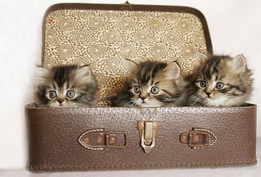 alle im Koffer
