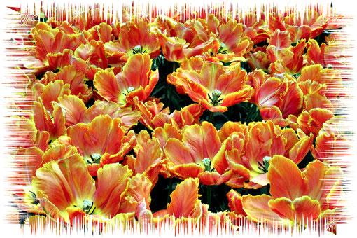 orangenes Flammenmeer