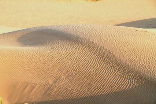 Wüste bei Bikaner