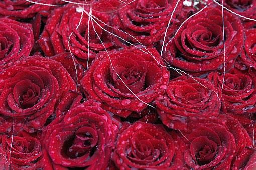 Rosen mit Tropfen