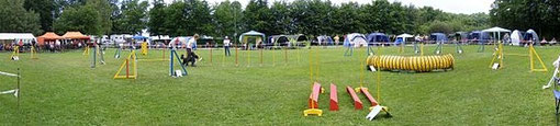 A typical agility course