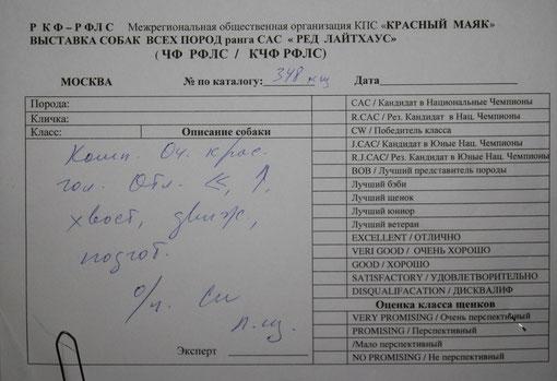 Лучший щенок, эксперт Гаврилова (Россия)