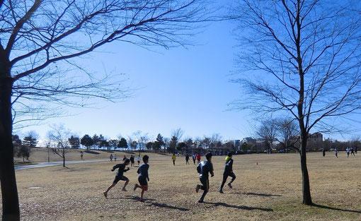 武蔵野の森公園を走る学生(高校駅伝的世界)