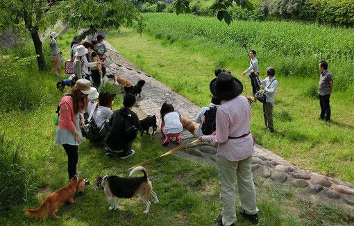 野川にかかる天神橋の近くで、ワンちゃんといっしょの避難訓練が行われていました。初めてのイベントでテレビ局の取材も来ていました