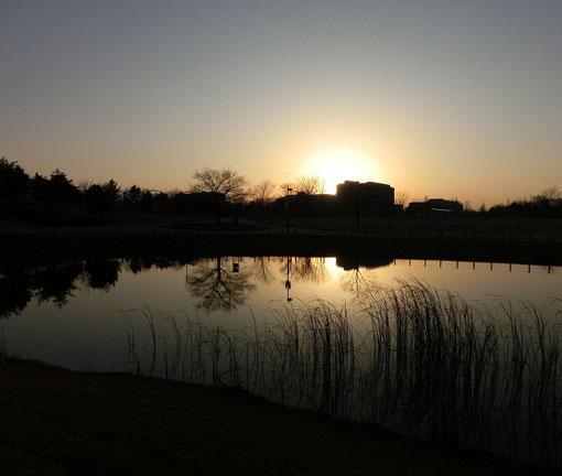 12月23日(2012) 夕暮れの修景池(東京外国語大学越しに沈む夕日:武蔵野の森公園)