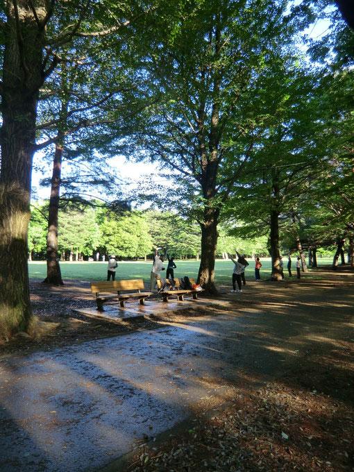 公園で太極拳をしている人々。清々しい空気の中で