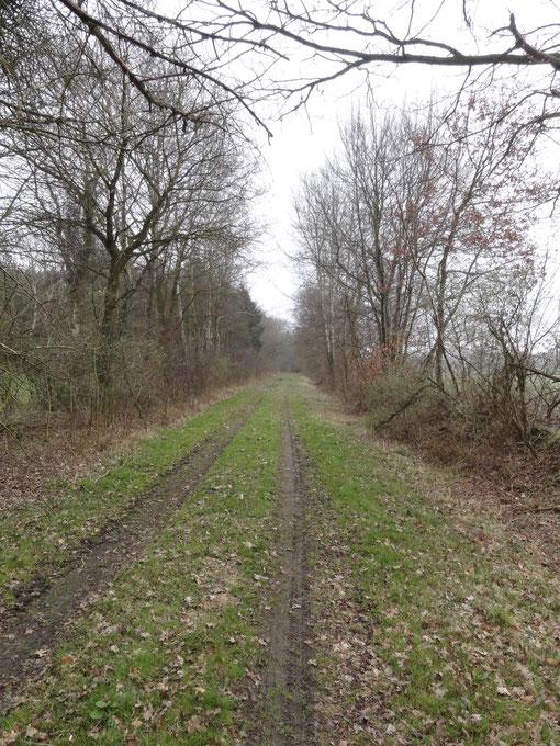 Sackgasse zwei - Waldweg bei Lohe, Axstedt, Bokel