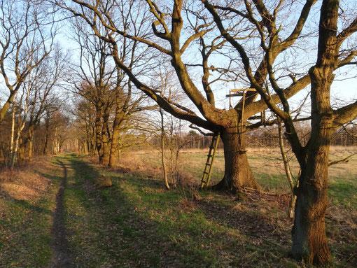 Torfweg im Großem Moor bei Bokel (c) Alte Schule Bokel