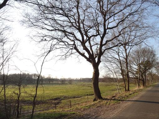 Wiese im Moordorf und Straßendorf Oberheise bei Hollen Heise Hollenerkamp Hollener Heide
