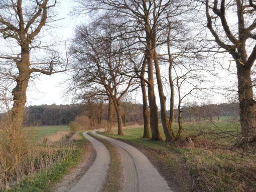 Weg bei Haßbüttel (c) Alte Schule Bokel
