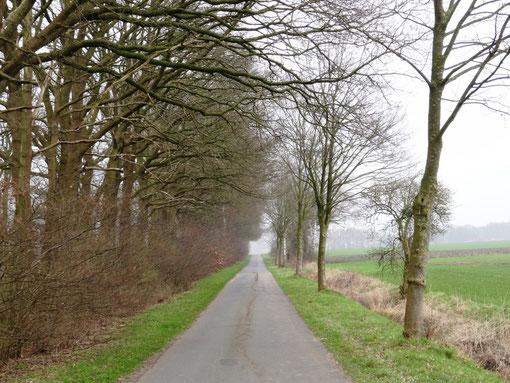 Straße (Radweg) Hof Gackau Richtung Bokel Kransmoor und Bokel Langenfeld