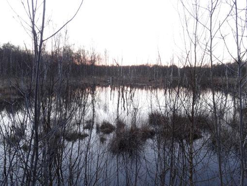 Großes Moor bei Bokel Langenfelde Kranzmoor Heise Oberheise Hollen Hollenerheide Hollenerkamp