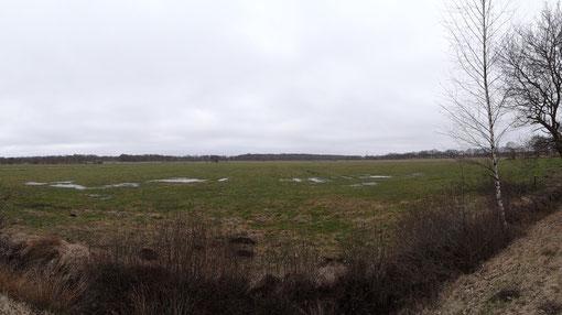 Wiesen bei Bokel Langenfelde Kranzmoor Heise Oberheise Hollen Hollenerheide Hollenerkamp