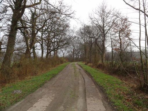 Weg der Sackgassen - Waldweg bei Lohe